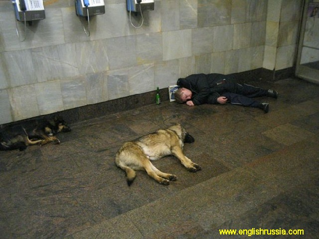 dogs and a drunk sleeping man in moscow city subway